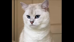 The image shows the cat named Coby.