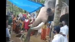 The image shows the elephant giving a tribute to the mahout.