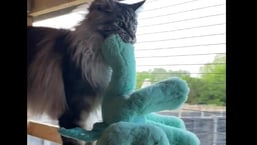 The image shows Nova the kitty with his dragon toy.