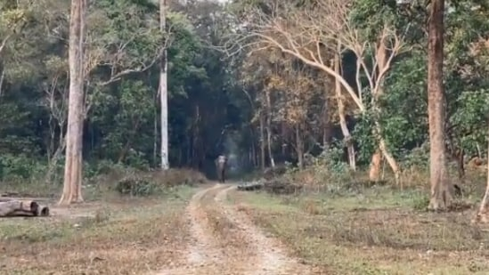 The image is taken from the video which shows an elephant's walk.(Twitter/@ParveenKaswan)