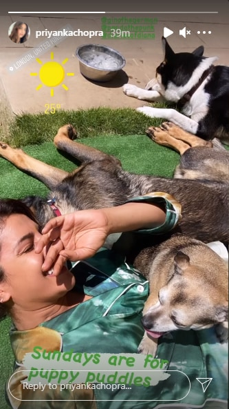 Priyanka Chopra shares a new picture with her dogs.