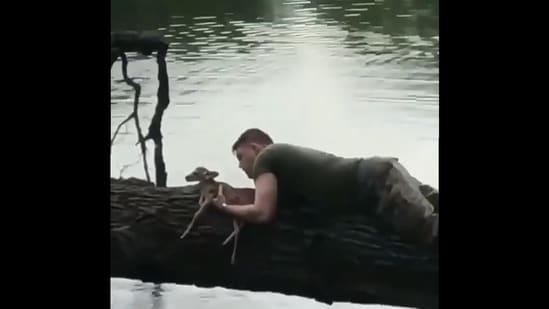 Soldier saves a drowning fawn(Twitter/@buitengebieden_)