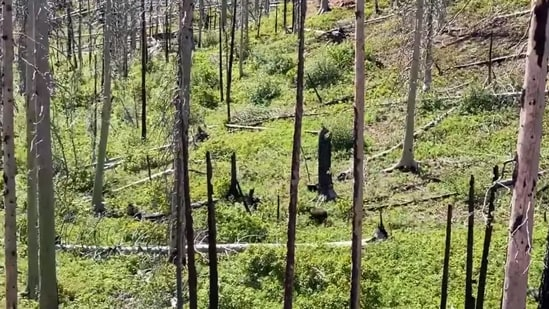 """""""Check out this amazing video of grizzly and black bears interacting!"""" reads a part of the caption shared with the video."""