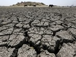 2021 Desertification and Drought Day: The United Nations has put the focus on turning degraded land into healthy land. (File Photo / REUTERS)
