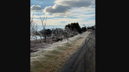 The image shows a region covered in spider web in Australia.(Reddit)