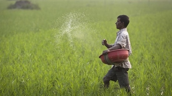 Farmers will now get a subsidy of <span class='webrupee'>₹</span>1,200 per DAP bag against the previous cap of <span class='webrupee'>₹</span>500. (AP Photo/Representative Image)