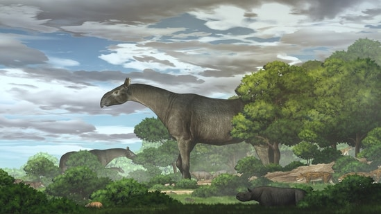 Paraceratherium linxiaense giant rhinos in the Linxia Basin during the Oligocene.(VIA REUTERS)