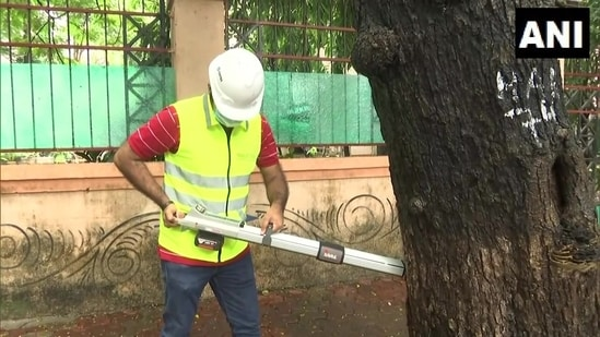 rihanmumbai Municipal Corporation appointed a tree surgeon to protect vulnerable trees.(Twitter/@ANI)