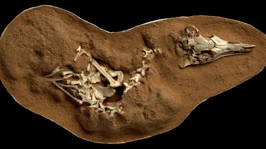 """Professor of Palaeobiology, David Martill, said: """"This is the first time dinosaur footprints have been found in strata known as the 'Folkestone Formation'. (representational image)(via REUTERS)"""
