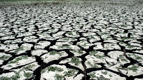 """""""It confirms what we already knew, that this situation is very dire and that we need to act right now,"""" Thunberg said. In picture - Dried area of the Penuelas Lake in Chile.(AFP)"""