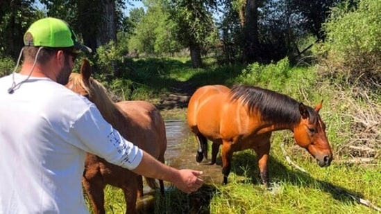 Matthew Eickholt and his wife rescued the horse from drowning in the Bitterroot River north of Victor, Montana. (AP)