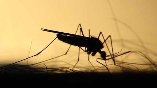 While Delhi reported 228 cases of malaria last year, including the first death due to the disease in at least nine years, the city has seen only 11 cases of malaria till June 26 this year.(Unsplash)
