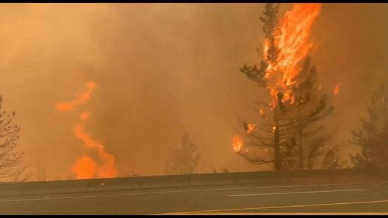Trees burn along a street during a wildfire in Lytton, British Columbia, Canada . (REUTERS)