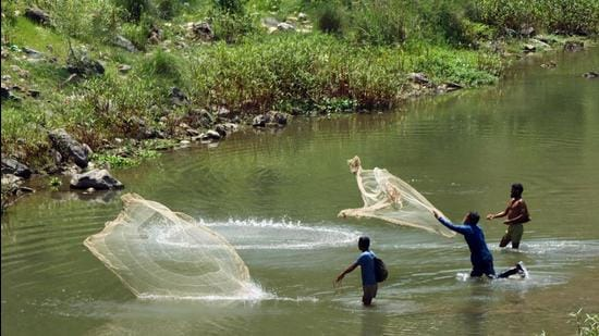 The successful experiment has paved a way for culturing the trout fish in warm districts also when the water temperature is congenial, the minister said. (Representational image) (HT FILE)