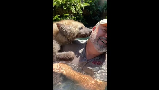 Jay Brewer 's video with a hyena has collected over a million views on Instagram. (Instagram/@jayprehistoricpets)
