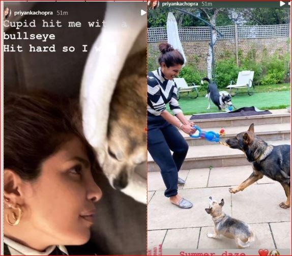 प्रियंका चोपड़ा अपने पालतू जानवरों के साथ समय बिताती हैं।