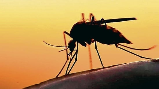 Zika virus spreads mostly by the bite of an infected Aedes species mosquito, which bites during the day.(Shutterstock)