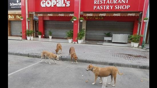 Residents say eateries in Sector 8 were drawing stray dogs from neighbouring sectors, but the authorities hadn't been considering their complaints. (HT Photo)