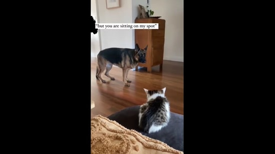 The dog looking at the kitten and complaining about his spot being taken. (Instagram/@german_shepherd_training)