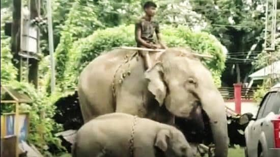 A local forest officer stated that the elephant attacked the child after the latter reportedly tried to hug its calf. The incident was reportedly the third time the pachyderm had attacked humans. (Sourced)