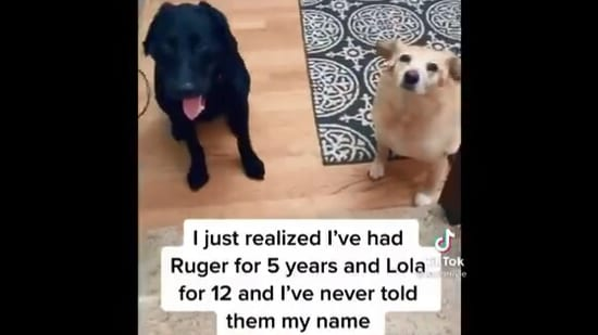 The video of the dogs reacting to their human telling them her name has left people chuckling.(Screengrab)