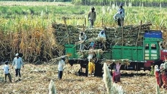 As the name suggests, the PM-KISAN is for families involved in farming.(HT file photo)