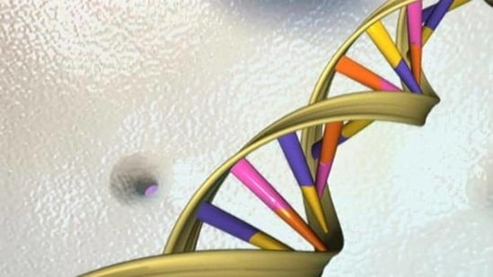 A recent study suggests that 7% of our genome is uniquely shared with other humans, and not shared by other early ancestors.(Representational image/Reuters)