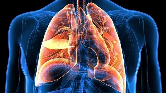 Lung cancer is the uncontrolled growth of abnormal cells that start off in one or both lungs.(Shutterstock)