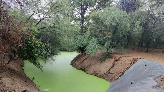 Rainwater in the Aravallis were channelled to check dams that were constructed to prevent flooding of Golf Course Road.