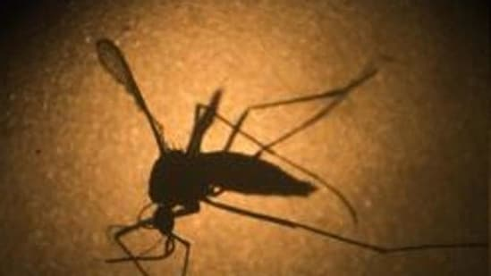 So far, 41 cases of the Zika virus disease have been detected in Kerala of which five were active as of Wednesday.(Representational image)
