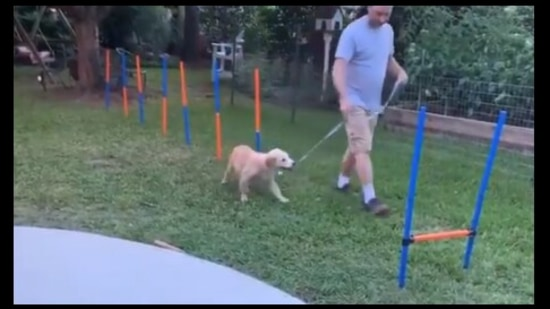 The image shows the doggo going around the obstacle course.(Twitter/@rexchapman)