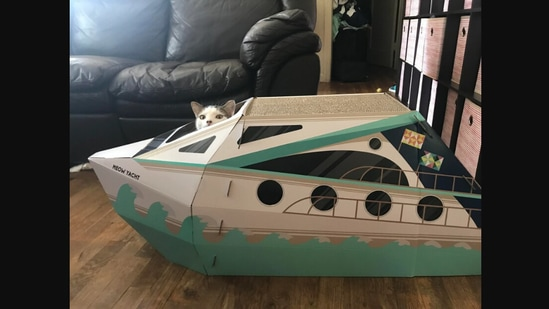 The image shows the cat with his new 'yacht.'(Reddit/@mocat)