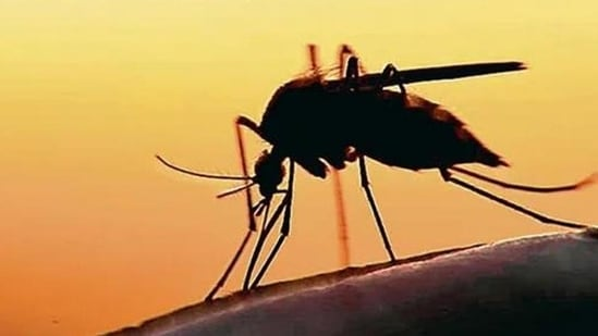 With three more positive cases, the number of Zika virus infections in Kerala reached 51 on Monday.(Representational image)
