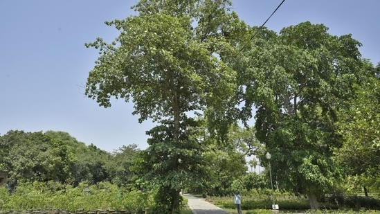 The endangered native tree varieties will be grown in the nursery, and once ready, planted in the sanctuary itself.(HT Photo)