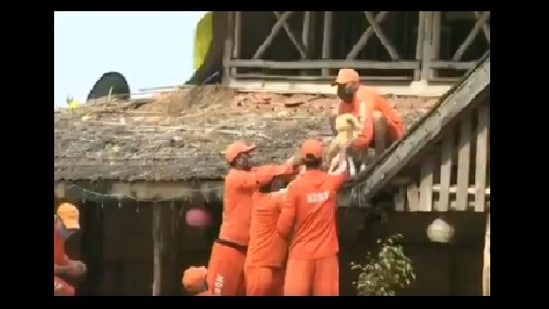 The image shows NDRF personnel rescuing the dog from the flood-hit Shiroli area in Maharashtra.(Twitter/@ANI)