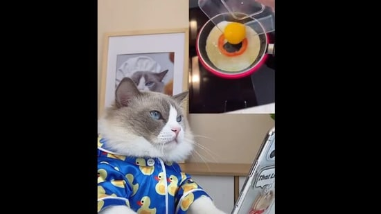 The image shows Puff the kitty watching a cooking hack.(Instagram/@thatlittlepuff)