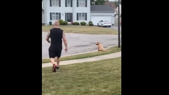 The image shows the doggo waiting patiently for the ball.(Reddit)