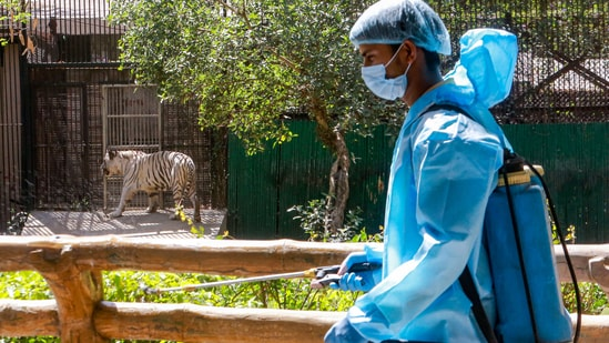 The Delhi zoo was shut for visitors on March 18 last year, a week before the nationwide lockdown.(PTI)