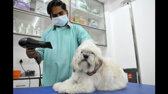 Pet parents in Delhi-NCR are lining up to get grooming sessions for their furry babies. (Photo: Abhinav Saha/HT (For representational purposes only))