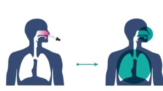 Nasal vaccines against Covid-19 are likely to prevent the virus from entering through the nose, (Photo: Bharat Biotech)
