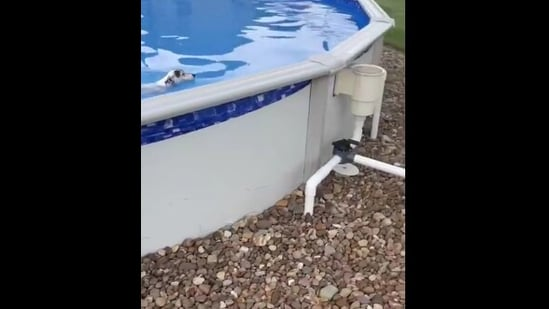 The image shows the doggo swimming in the pool.(Reddit)