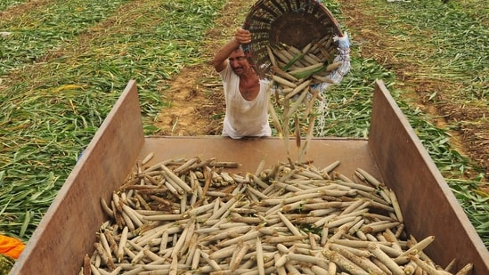 Risks to agriculture tend to be more acutely felt because they are most visible, but shocks to manufacturing could also be huge, studies have shown.(HT file photo. Representative image)