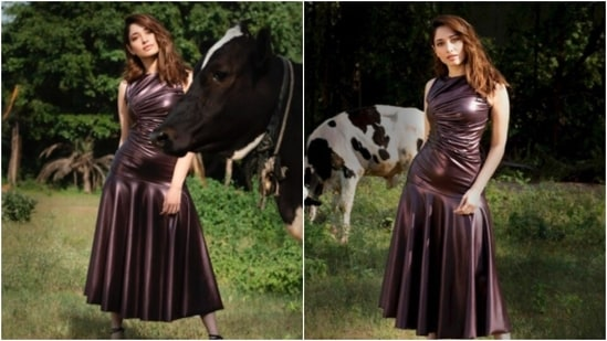 Recently, the actor took to her Instagram handle to share a photo of herself in a metallic dress. In the photo, Tamannaah can be seen posing on a farm with a cow in the picture.(Instagram/@tamannaahspeaks)