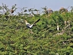 Almost 140 painted storks have already arrived in the zoo. Officials expect the numbers to reach more than 500 by the end of the month.(Photo shared by Delhi zoo)