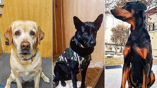 (From left) Maya, Roobi and Bobby were part of the K-9 sniffer dog squad at the Indian embassy in Kabul. (PTI)