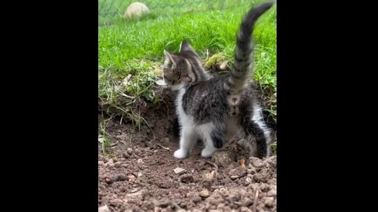 The image shows a tiny kitten.(Reddit)