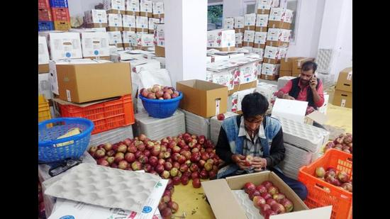Apples being packaged for sale in the wholesale market in Shimla. The expensive packaging material has added to the woes of the fruit growers. (HT file photo)