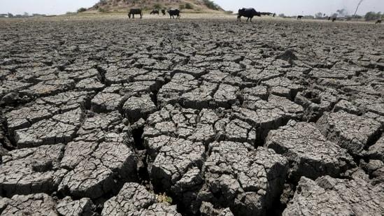 According to IMD, Odisha has recorded a 31% rain deficiency, Gujarat 47%, Kerala 28%, Manipur 58%, Arunachal Pradesh 25%, Mizoram 28% and Nagaland 24%.(File Photo / REUTERS)
