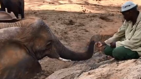 The image shows a sweet moment between the elephant and its former keeper.(Twitter/@SheldrickTrust)