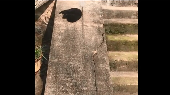 The image shows the cat sliding down a slope.(Reddit/@jacobyh7)